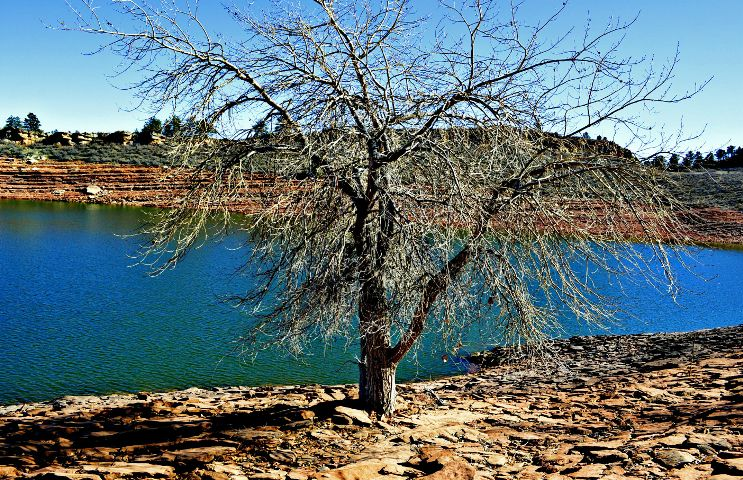 nature,trees,water,colorado