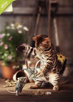 cat artwork photoshop fight