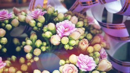 mother flower spring mothersday celebrate