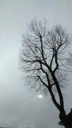 freetoedit photography tree textures