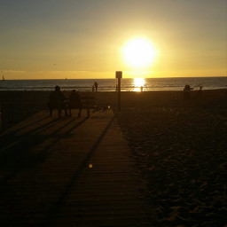 venicebeach losangeles califorina sunset santamonica