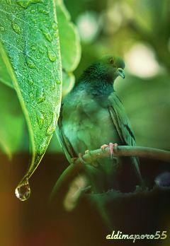 photography nature beautifypicsart emotions closeup
