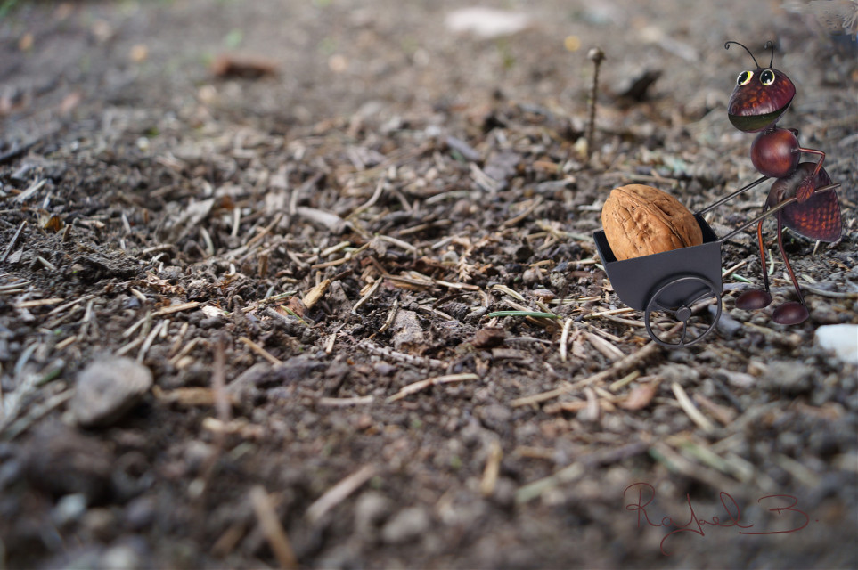 #nuts #photography #nature #dailytag