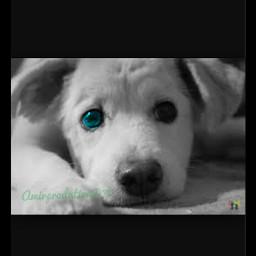 photography black colorchanger dog