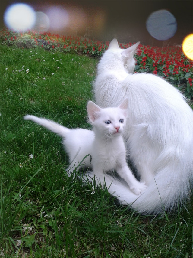 #motherandson #cat