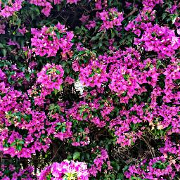 flower love nature spring sun