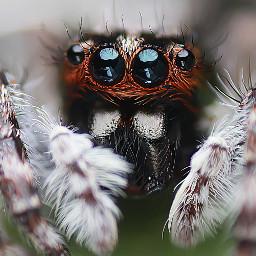 nature photography macro spider closeup