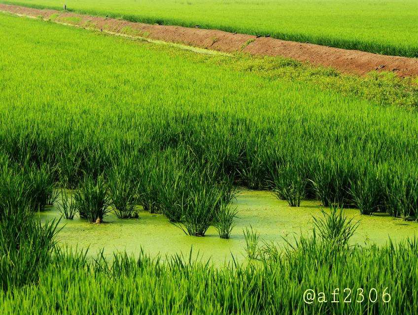 #limegreen  #harvest http://blog.picsart.com/post/limegreen-photo-gallery