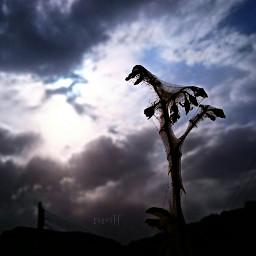 nature photography petsandanimals nmlf clouds