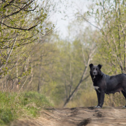 nature summer road dog