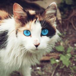 photography petsandanimals cat emotions eyes