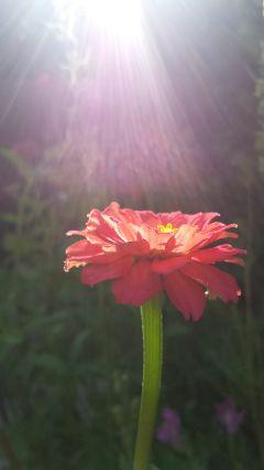 photography summer flower garden