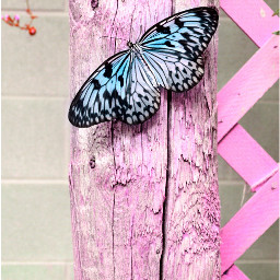 butterfly photography friendship bright