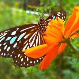 photography butterfly colorful flower blossom blackandwhite nature lowangle kerala
