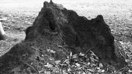 anthouse photography petsandanimals blackandwhite freetoedit