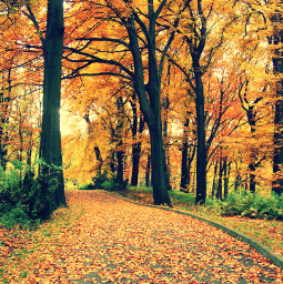 freetoedit photography colorful nature trees