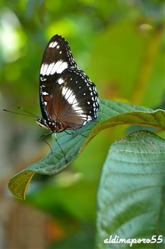 photography nature closeup butterfly