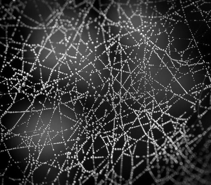 Intricate..  #web  #spiderweb  #drops  #raindrops  #dewdrops  #dew  #intricate  #nature  #photography  #macrophotography  #macro  #monochrome  #blackandwhite  #freetoedit