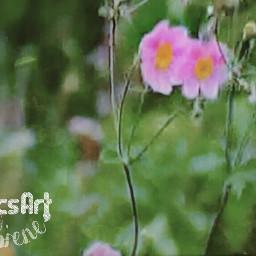 photography bokeh soft flower nature