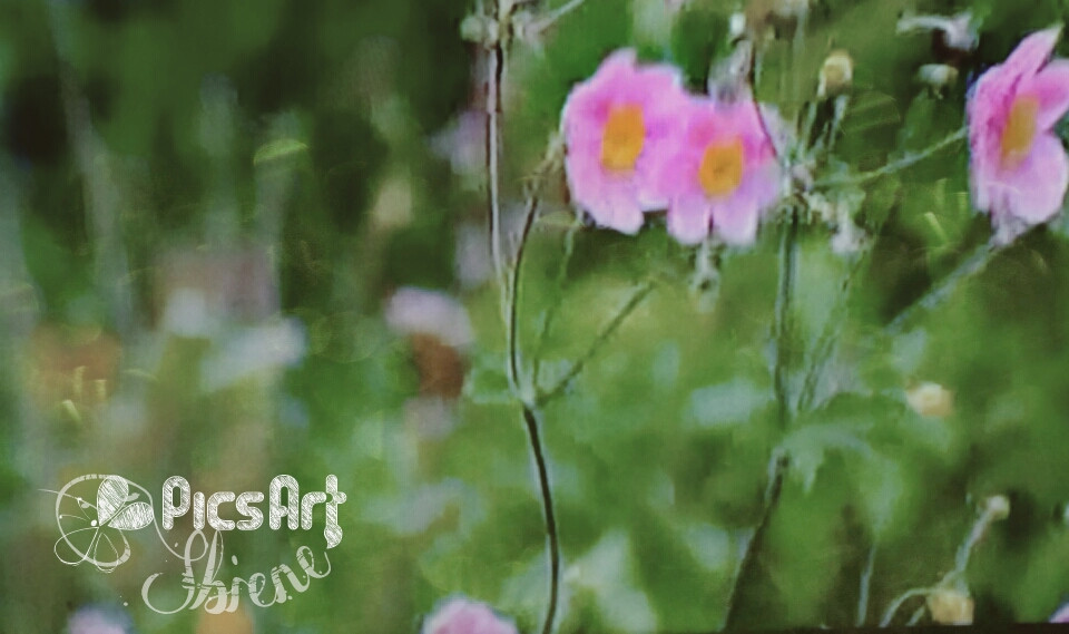 #photography #bokeh#soft #flower #nature #emotions#fx #love / Happy Sunday fantastic artists friends around the world 🌐💞🙋