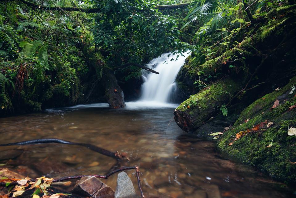 Rainforest in switzerland... A waterfall in Ticino (CH)   #rainforest  #switzerland #longexposure #nature  #photography #travel #summer