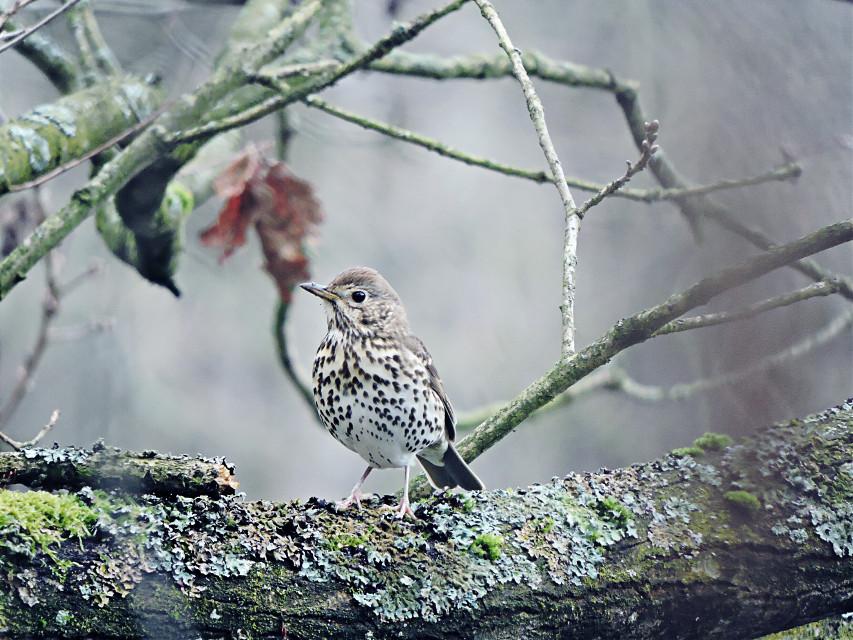 #petsandanimals #photography #nature