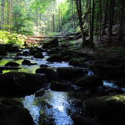 bavarian water trees