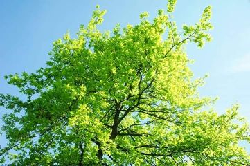 tree green wonderful world nature