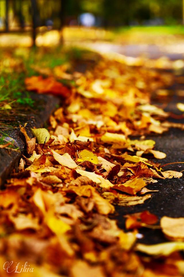 #freetoedit  #nature   #autumn #nature #landscape #photography