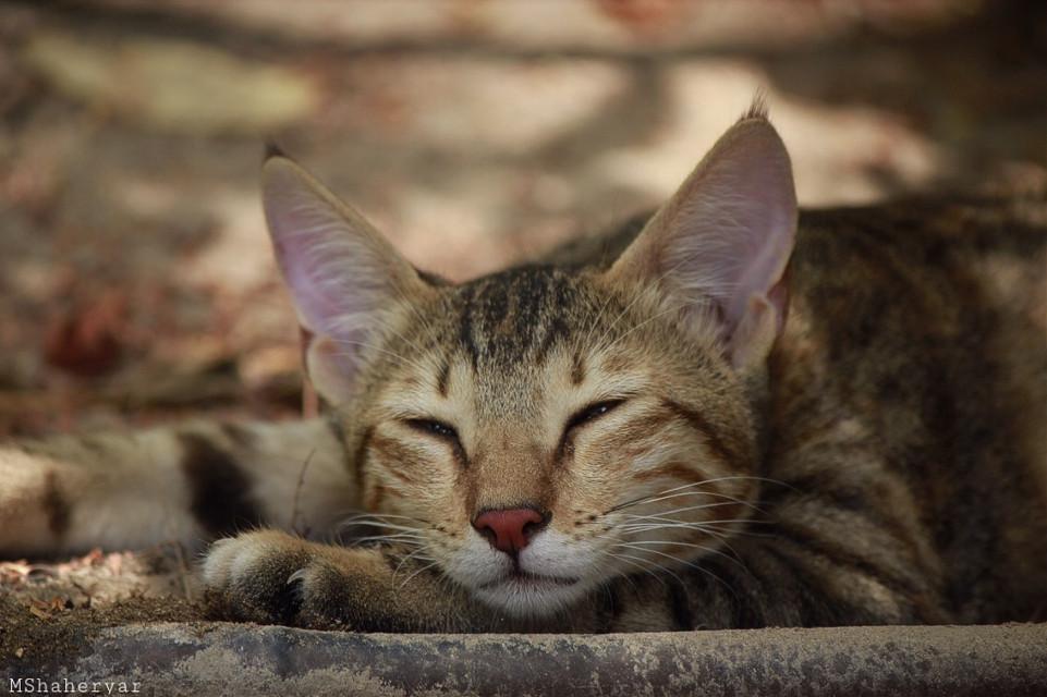 Good Night Everyone #photography #pets #animals #petsandanimals #cat #resting #cute