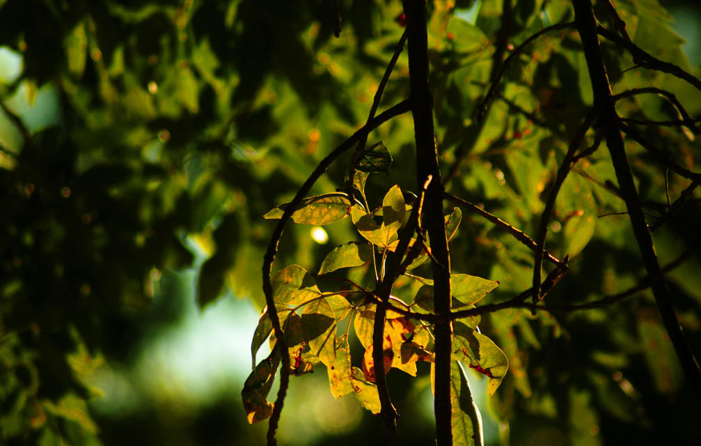 Hint Of Autumn  #nature #tree #leaves #colorful #yellow #photography  #artistic