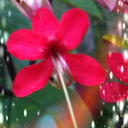 flower photography wildplant
