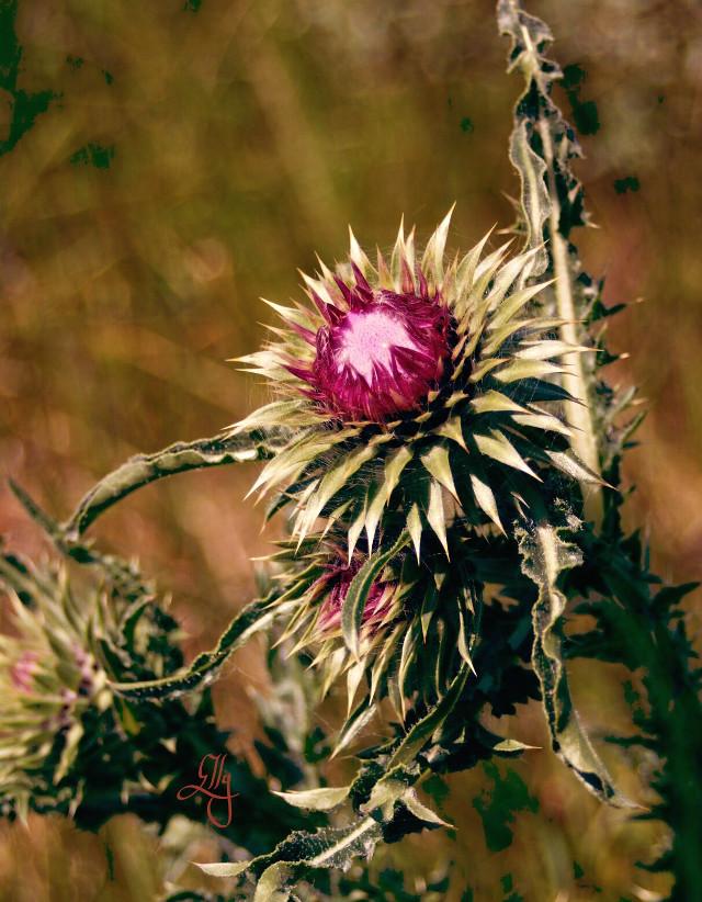 #curvestool #flower #nature